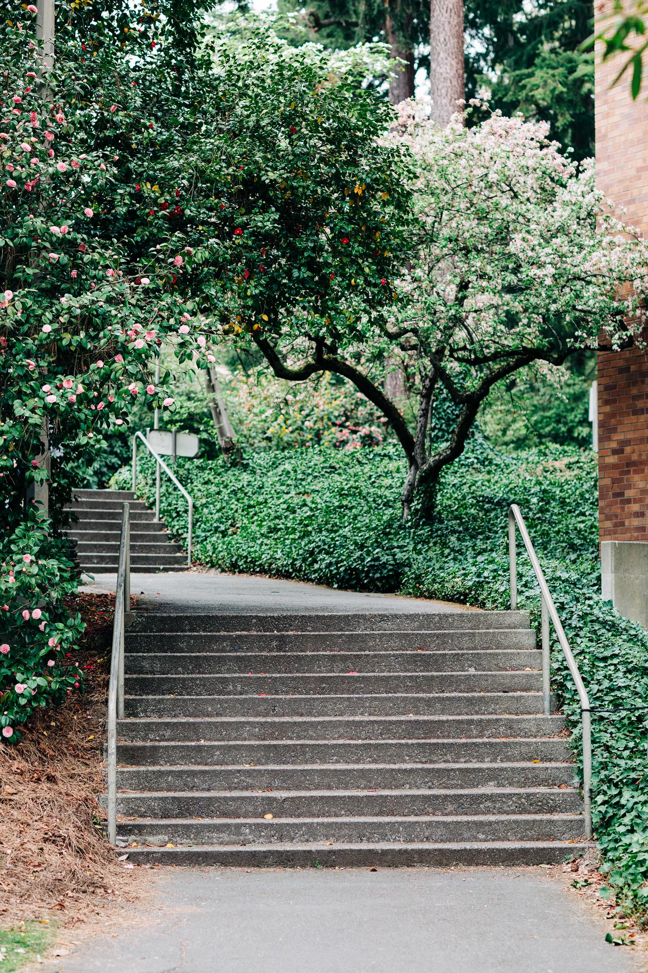 UW-Cherry-Blossom-1.jpg