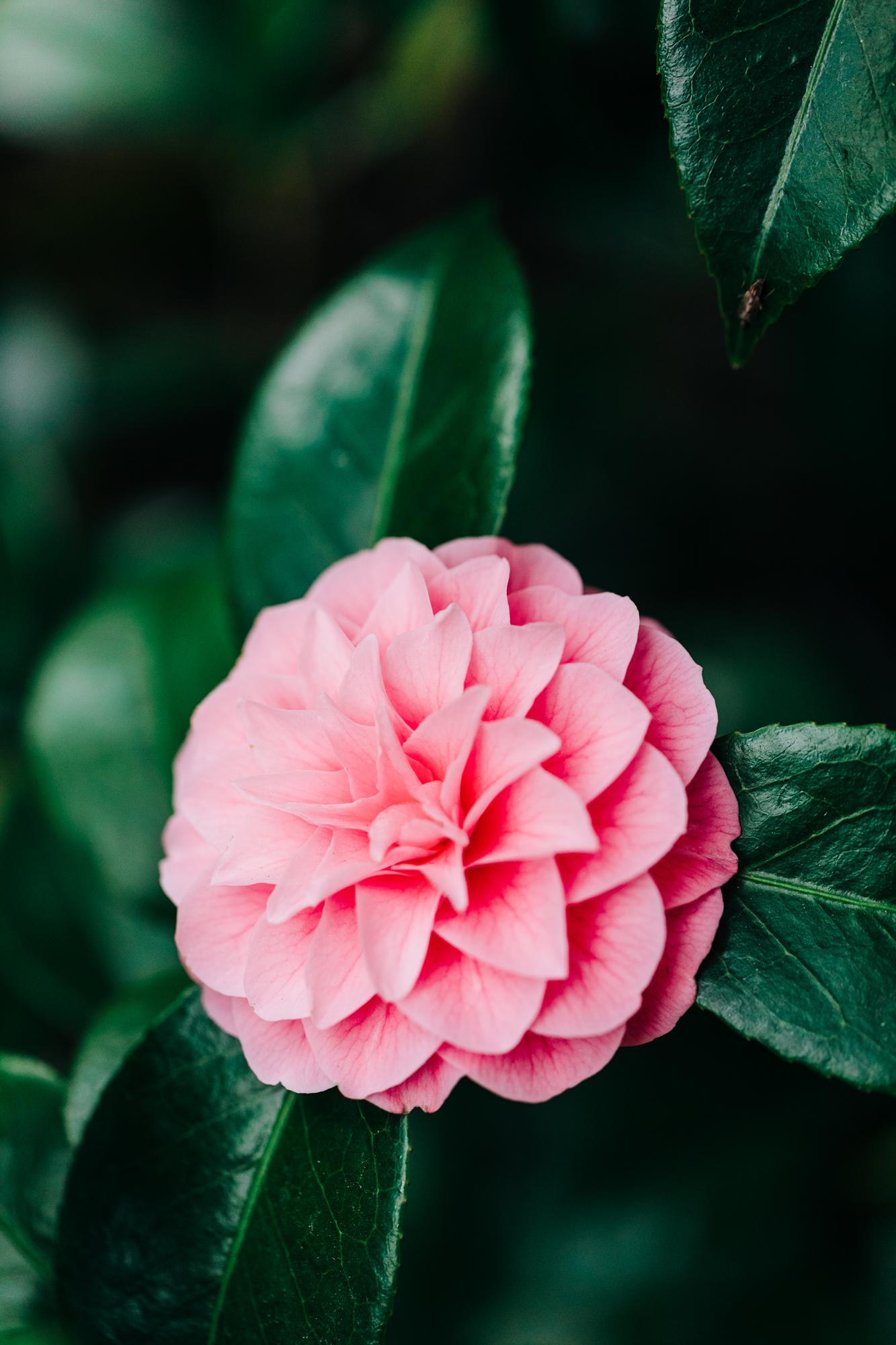 UW-Cherry-Blossom-3.jpg