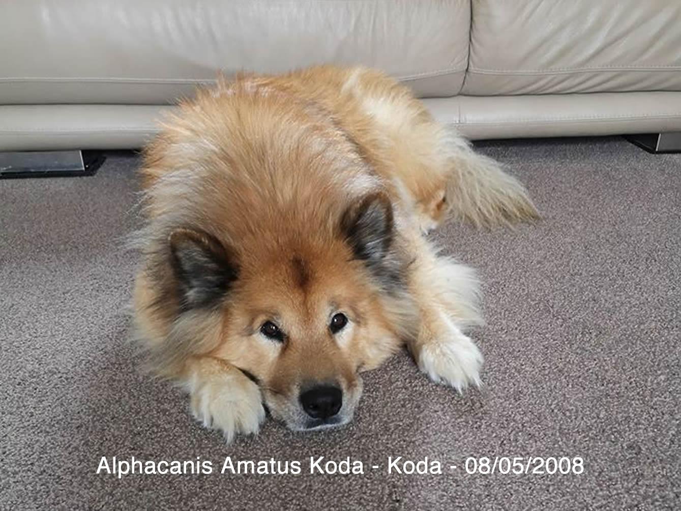 Alphacanis Koda_A.jpg