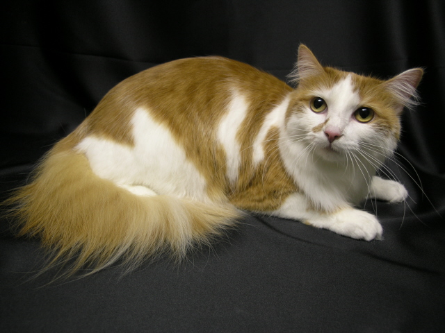 One of the benefits of regular professional grooming is reduced shedding, leading to reduced hairballs as well!