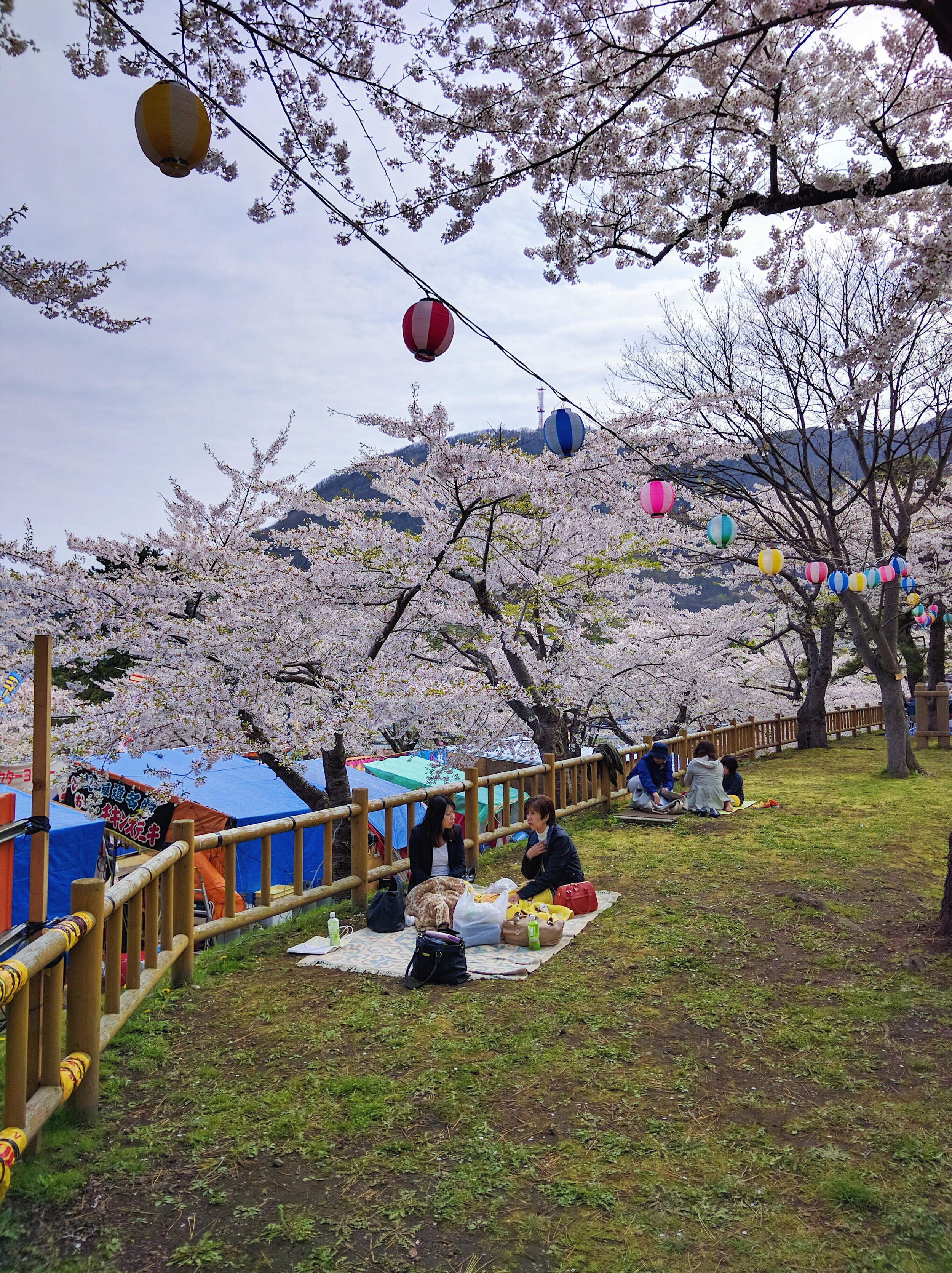 Common Japanese past-time during cherry blossom season is picnicking under the blooming trees and enjoying the scenery, an activitiy called  hanami  in Japanese.