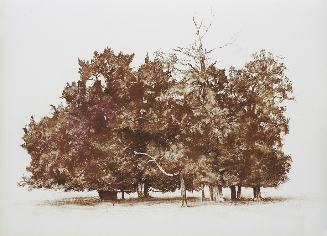 Untitled (copse), 2010