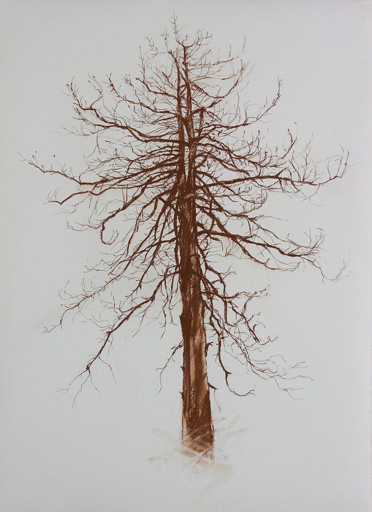 Untitled (branches), 2010