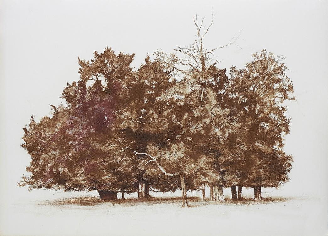 Untitled (Copse), 2010