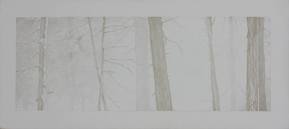 Muir Woods Study, 2001