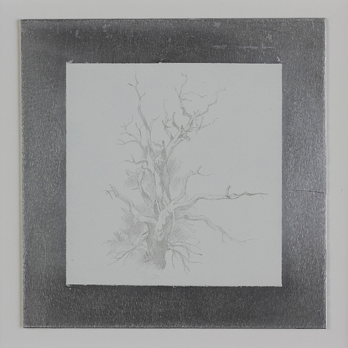 Pinon Pine, 2011