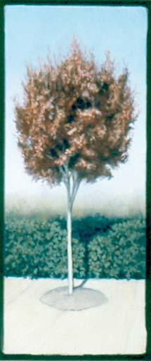 Plum, 2003
