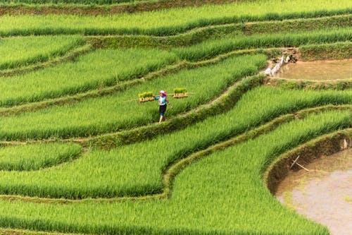 agriculture2.jpeg