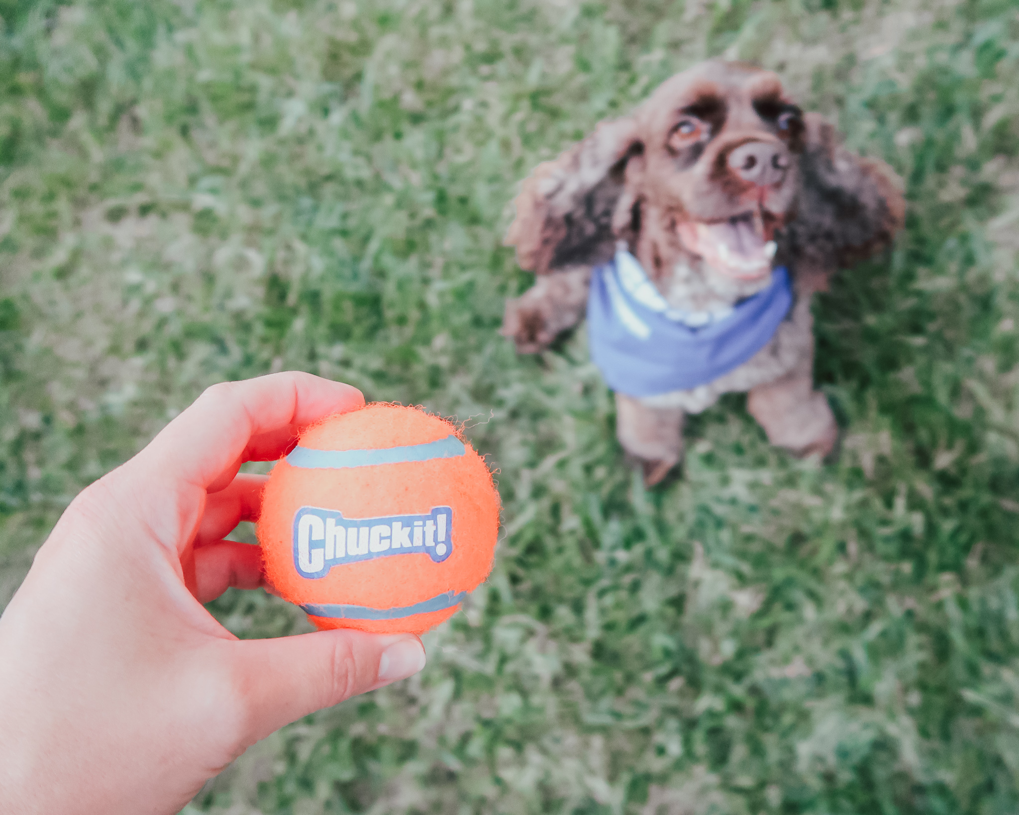 a-fetchin-way-for-your-dog-to-play-4.jpg