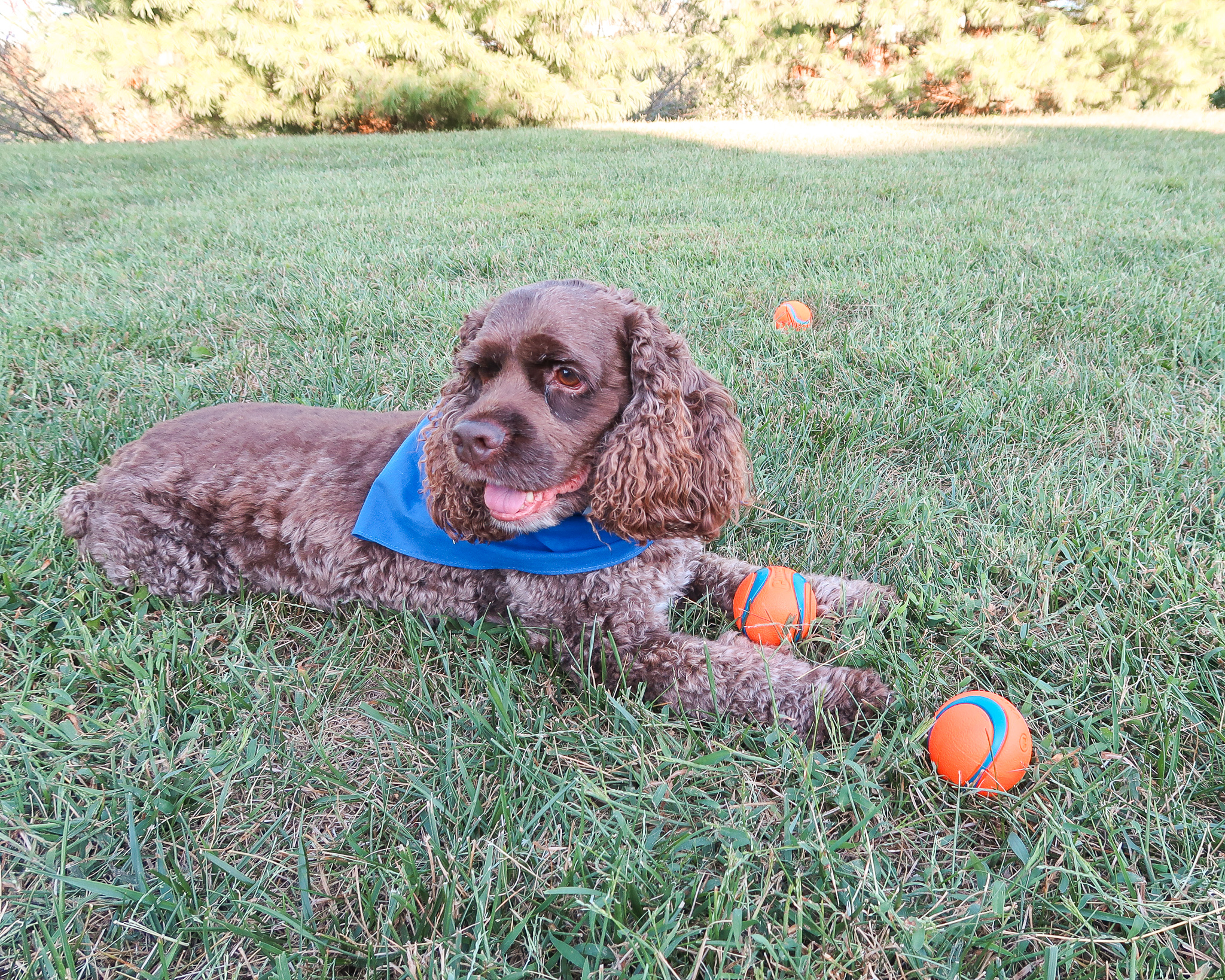 a-fetchin-way-for-your-dog-to-play-8.jpg
