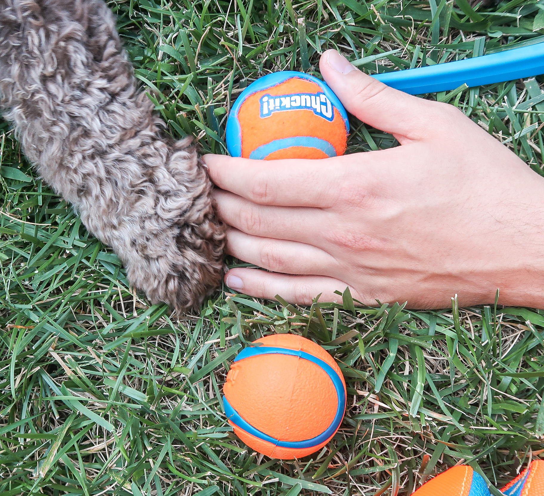 a-fetchin-way-for-your-dog-to-play-12.jpg