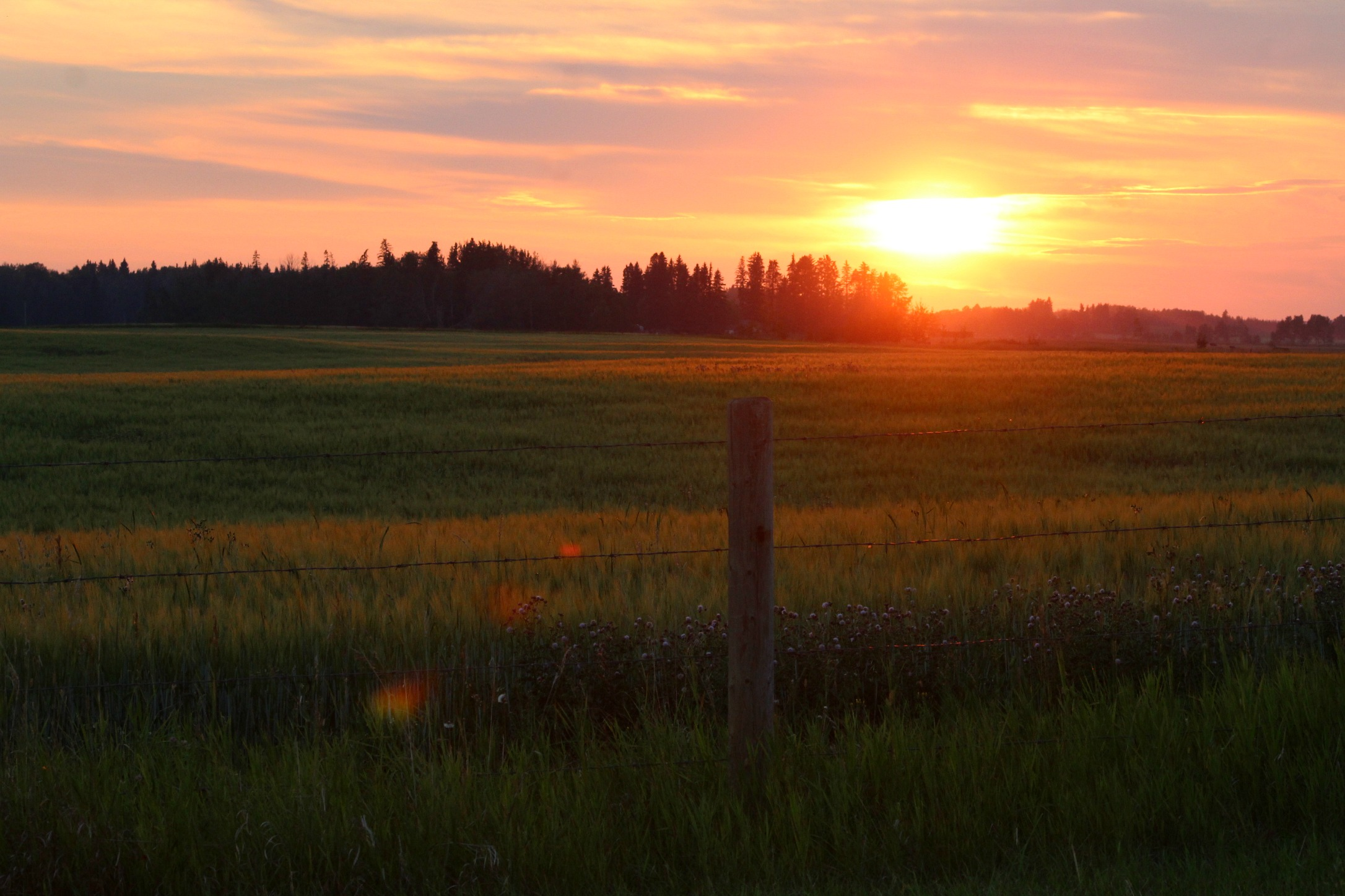 """Come Watch a Sunset with Us """"Your Farmers"""" - Keep an eye out and an ear to the ground for the Farm to Table events in the summer."""