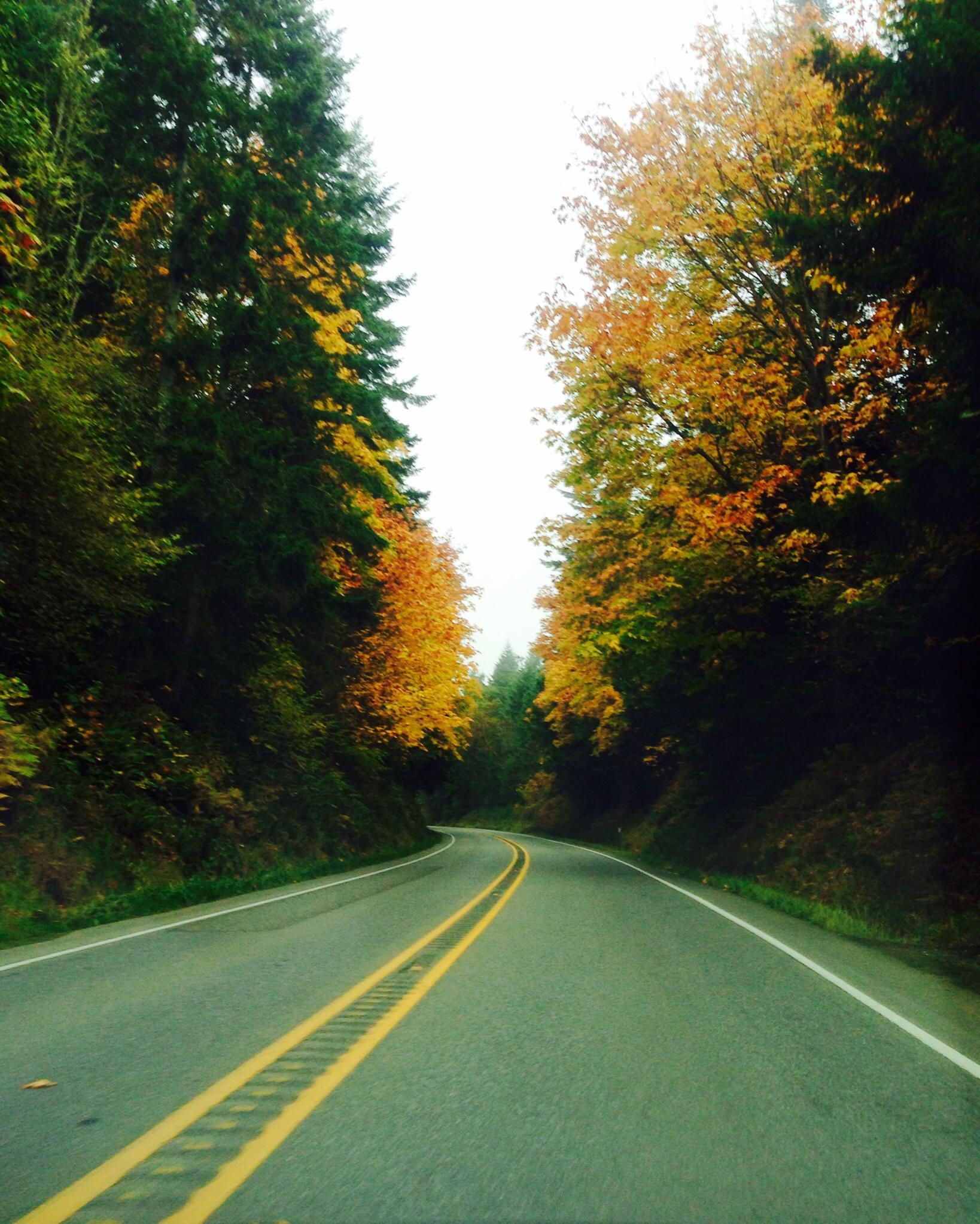 Fall trees road.jpg