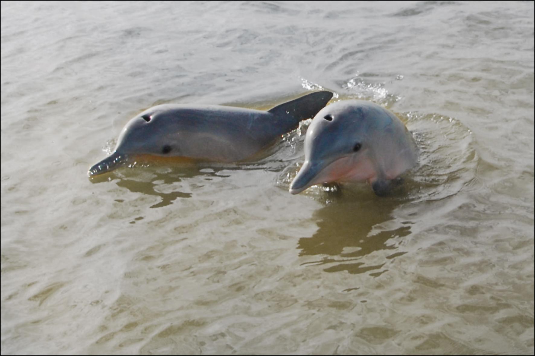 dolfijnen 330 15x10.jpg