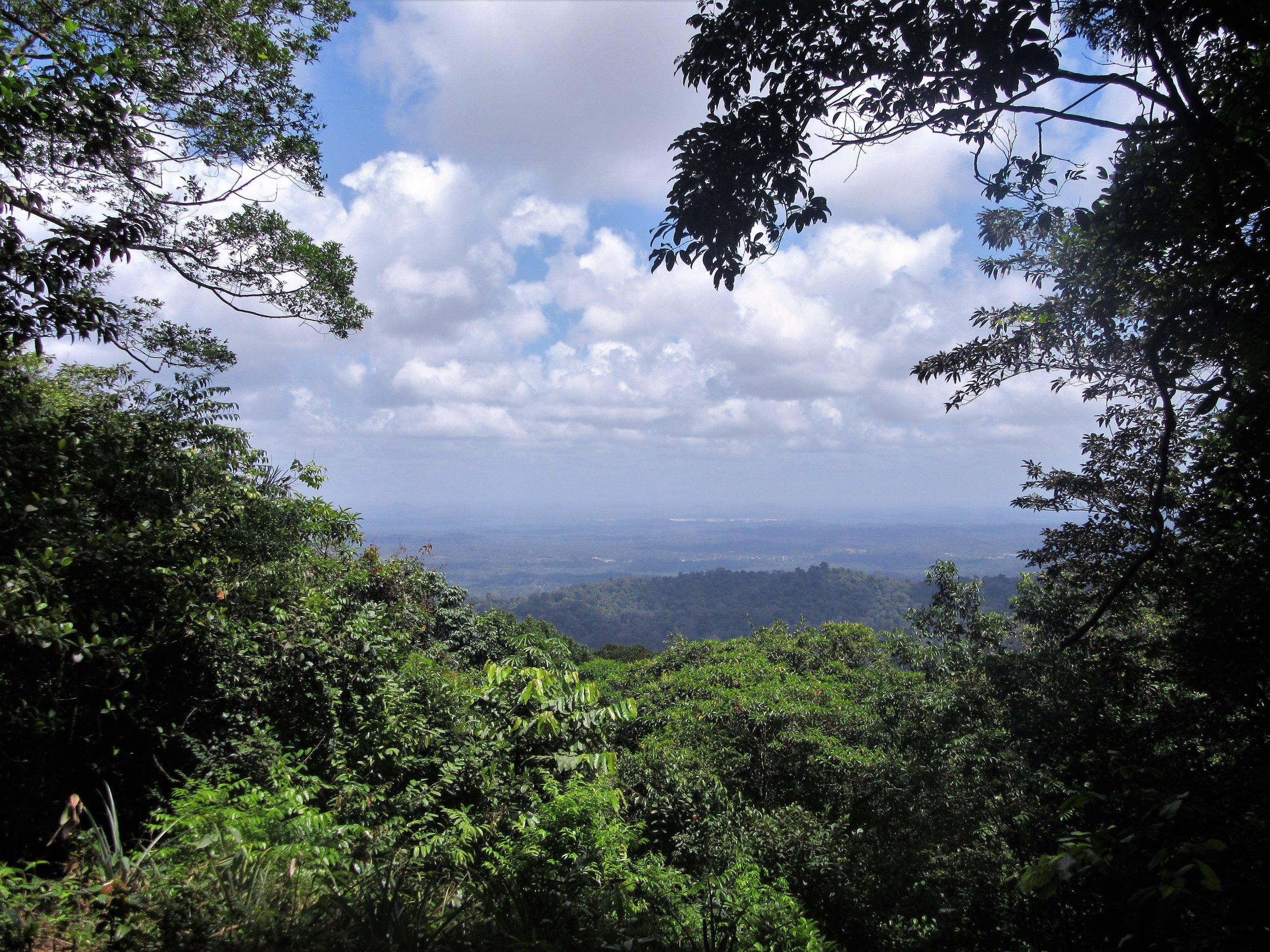 Brownsberg View (Suriname).jpg