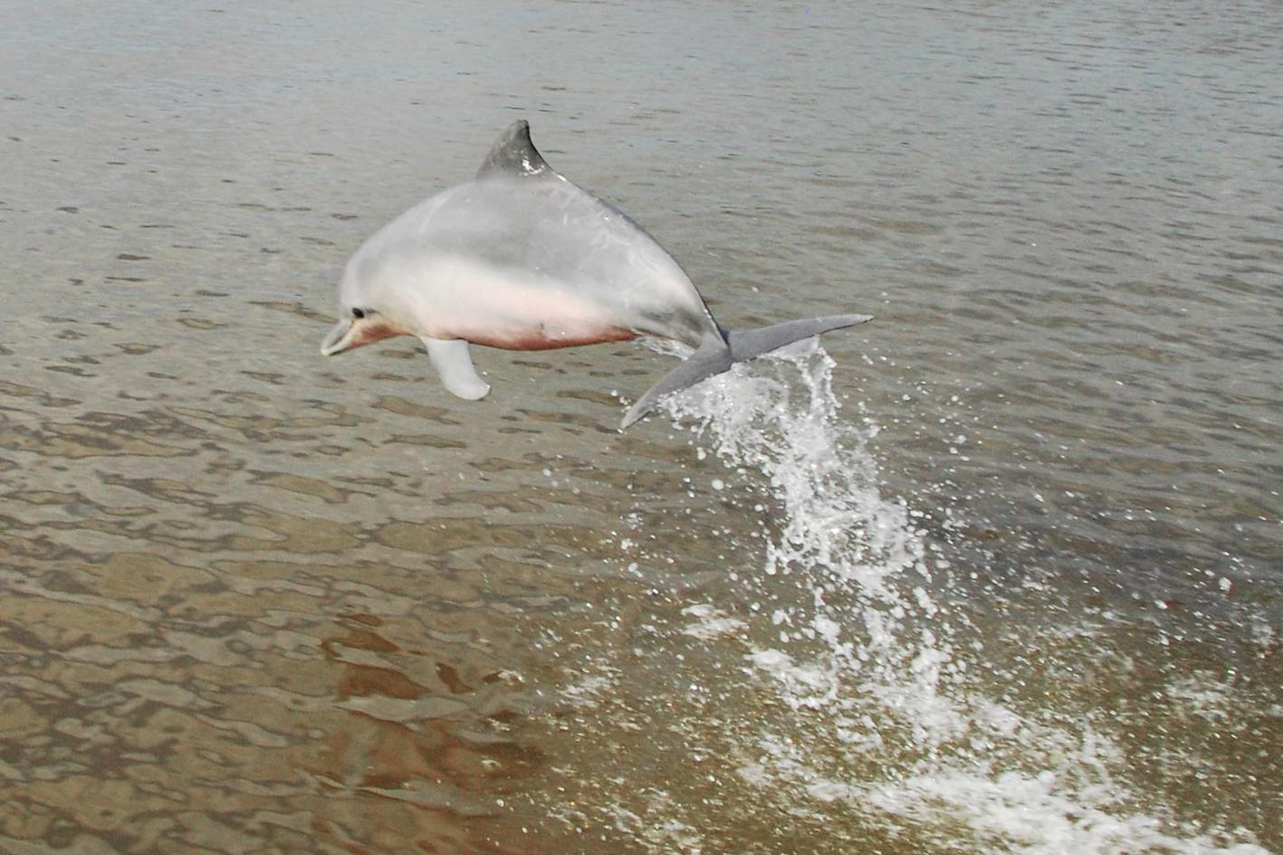 dolfijn jump tyi.jpg