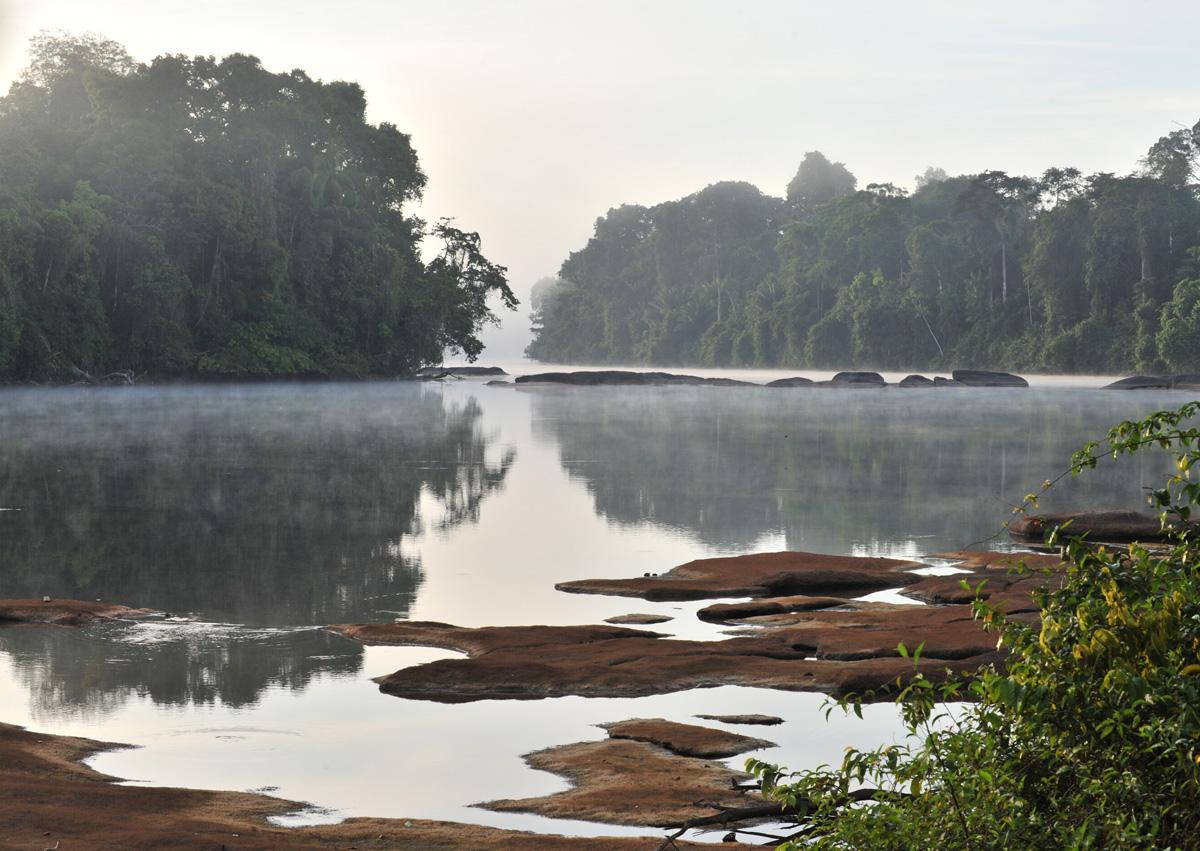 Suriname River and Jungle.jpg