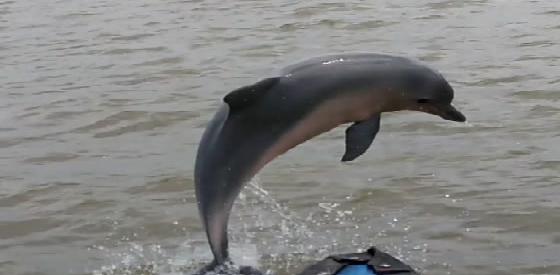 Dolfijnfoto 1.jpg