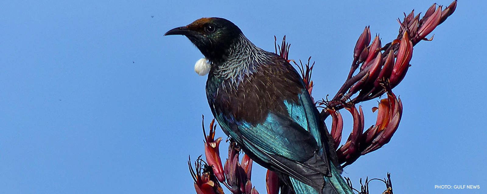 tui-with credit.jpg