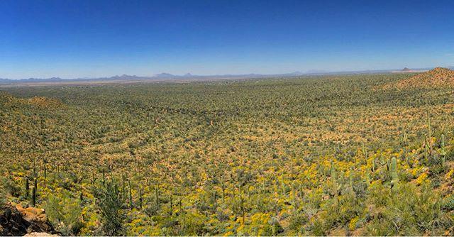 Look at all those cacti!! Cacti? Cact...guy? Hmm... #cactus #saguaro #nationalpark #arizona #roadtrip #audiodrama #fiction #podcast #roadtripradio