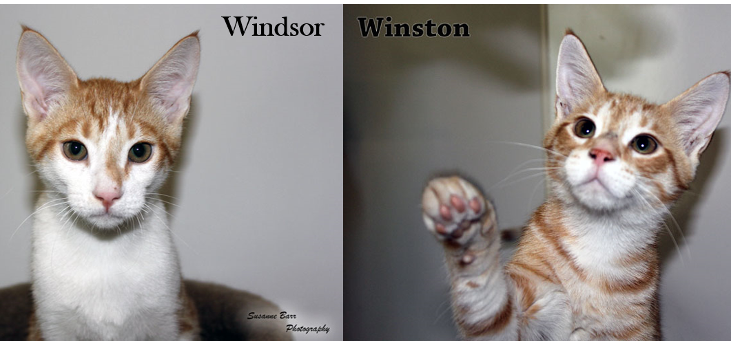 Windsor_Winston.png