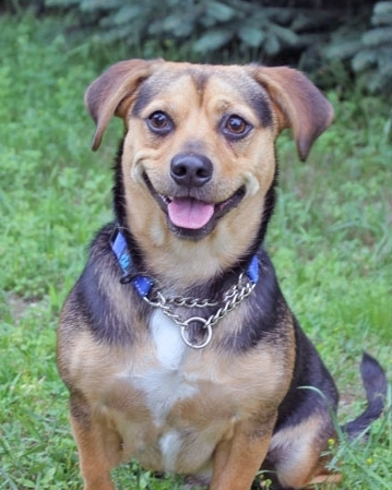MEET OUR DOGS & CATS   See profiles of available dogs & cats that are waiting for adoption.