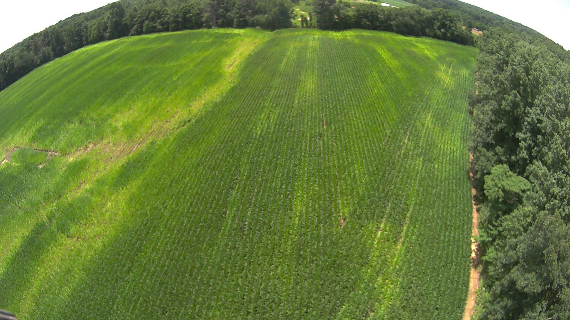 drone picture of crop in season.JPG