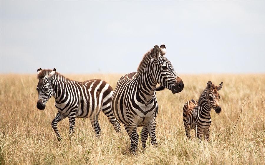 In Masai Mara Kenya 2014