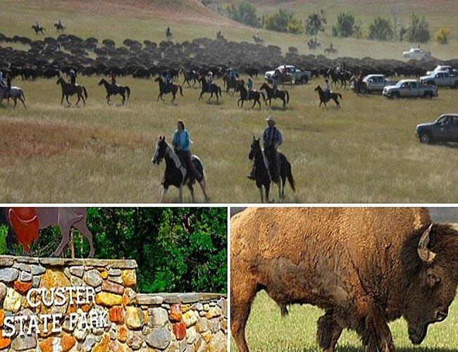 Custer-State-Park-Buffalo-Roundup.jpg