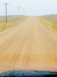 Cow Dirt road.300.jpg