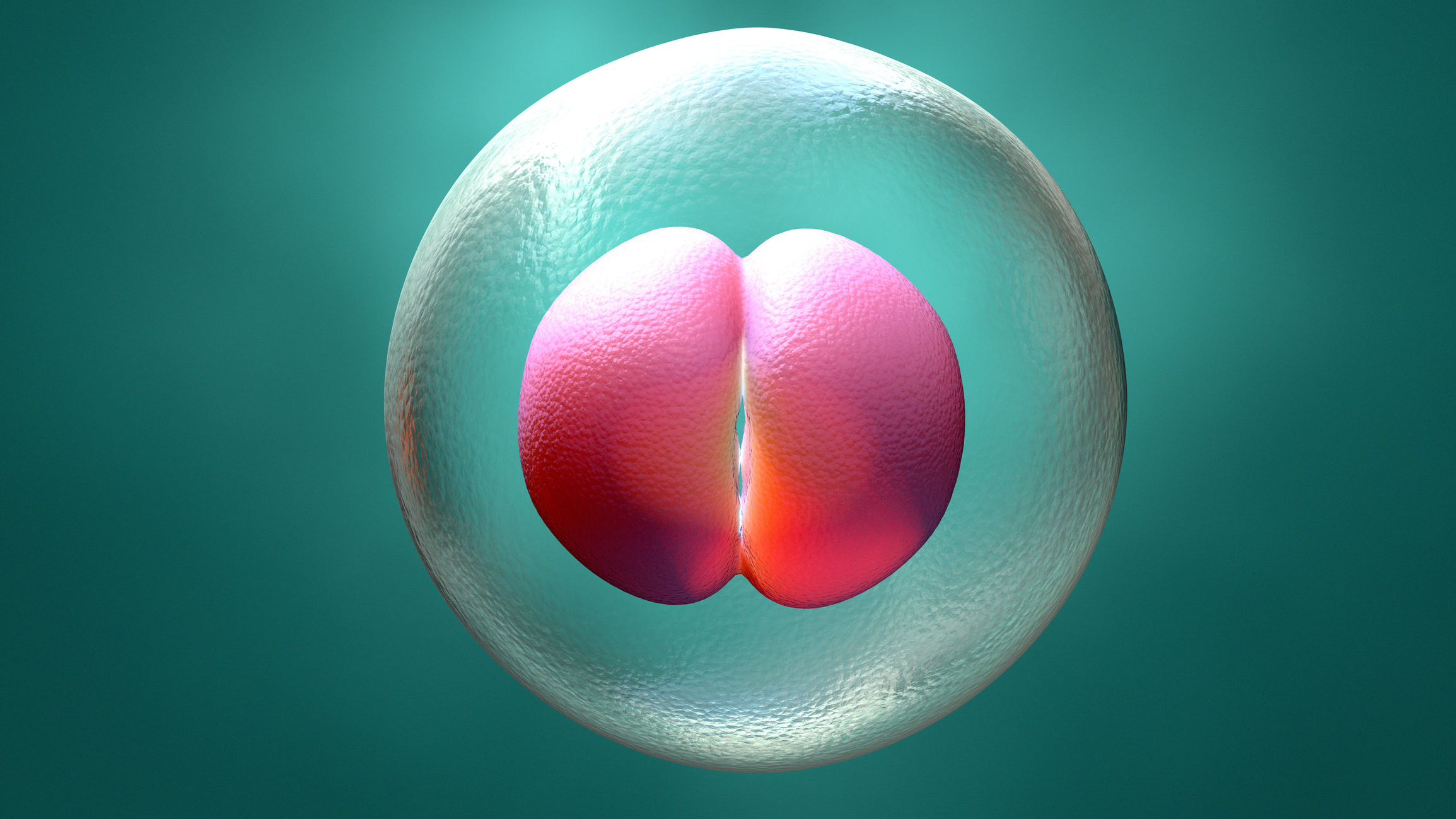 3d illustration embryo early stage