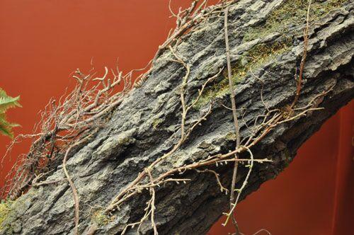 closeuptree.jpg