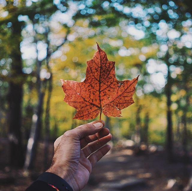 Happy Canada Day! 🇨🇦 #canadaday #1stofjuly #swcaventure #canada