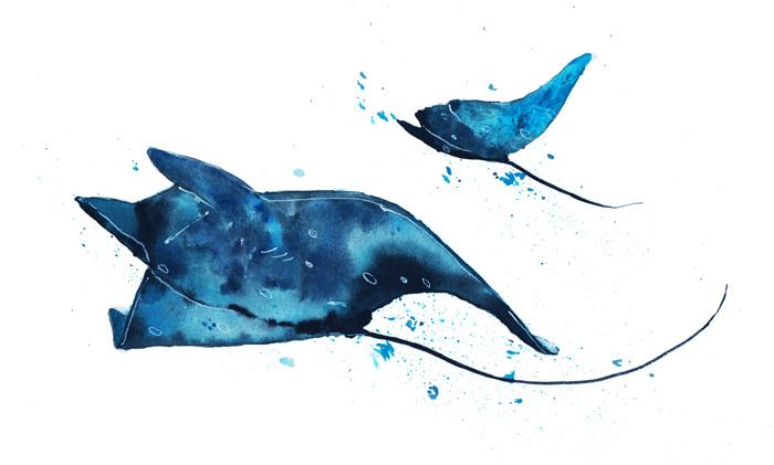 Manta-rays-copy-700.jpg