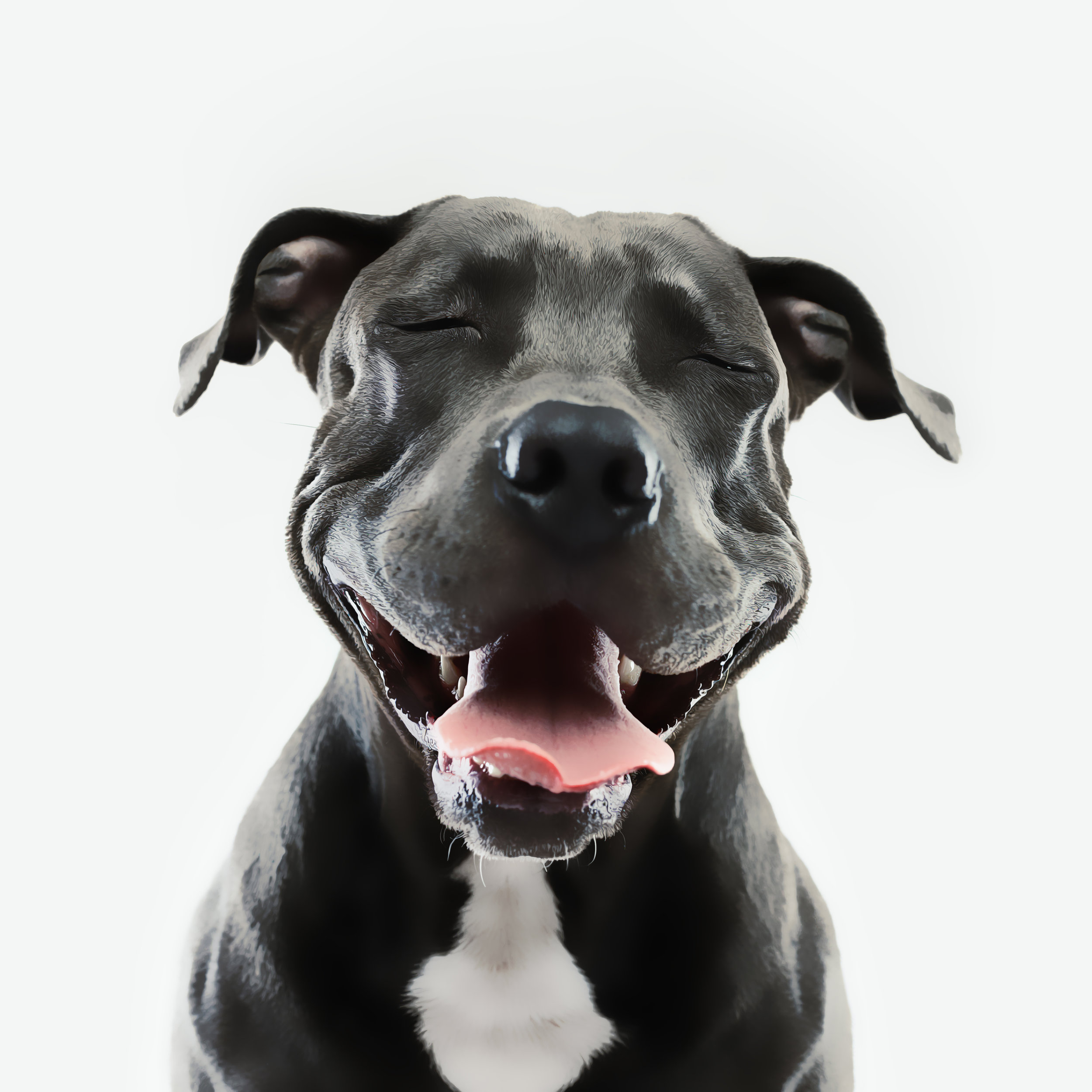 iStock-697946430 dog with PSD actin appllied.jpg