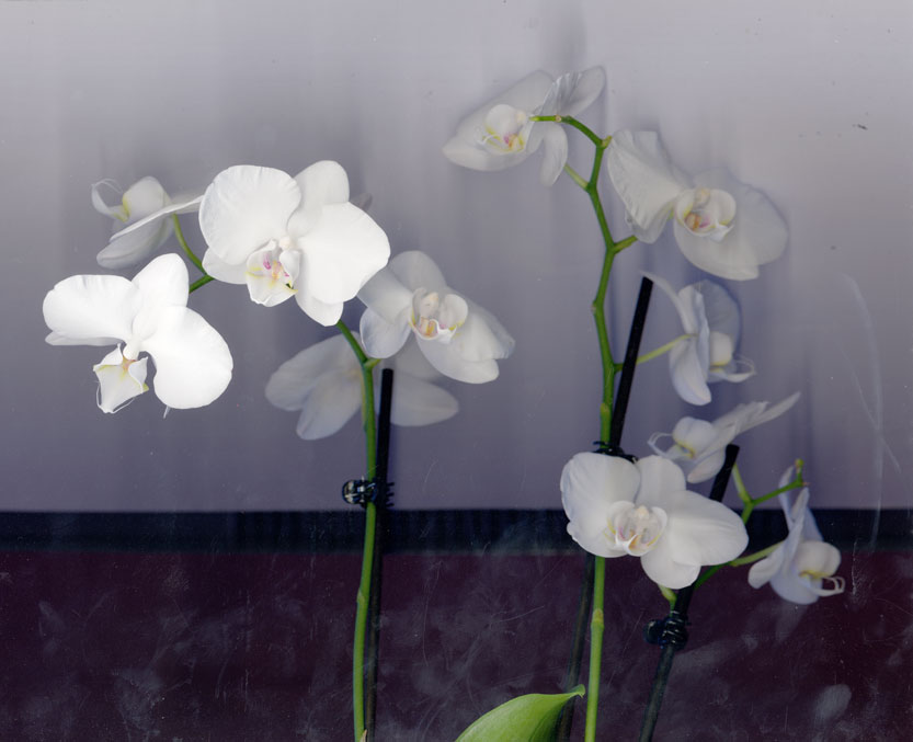 orchid-scan2.jpg