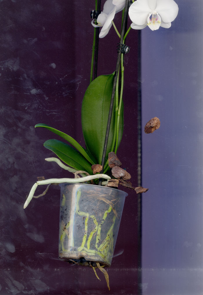 orchid-scan5.jpg