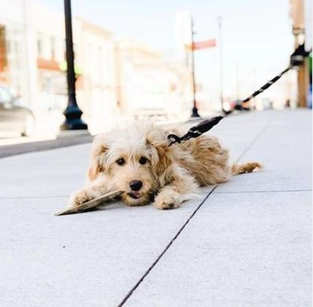Did you know Calhoun Square is dog-friendly? Each morning from 7-10am, you can walk your dog in the common areas of our shopping center - perfect for those chilly mornings! And don't forget to snap a picture of your fur baby and tag us!  📸@coors_thegoldendood . . . . . #minneapolis #mpls #uptown #hennlake #lynnlake #visitlakestreet #lakecalhoun #calhounsquaremn #calhounsquare #mnmade #mnproud #discoverminnesota #exploreminnesota #uptownartfair #uptownmpls