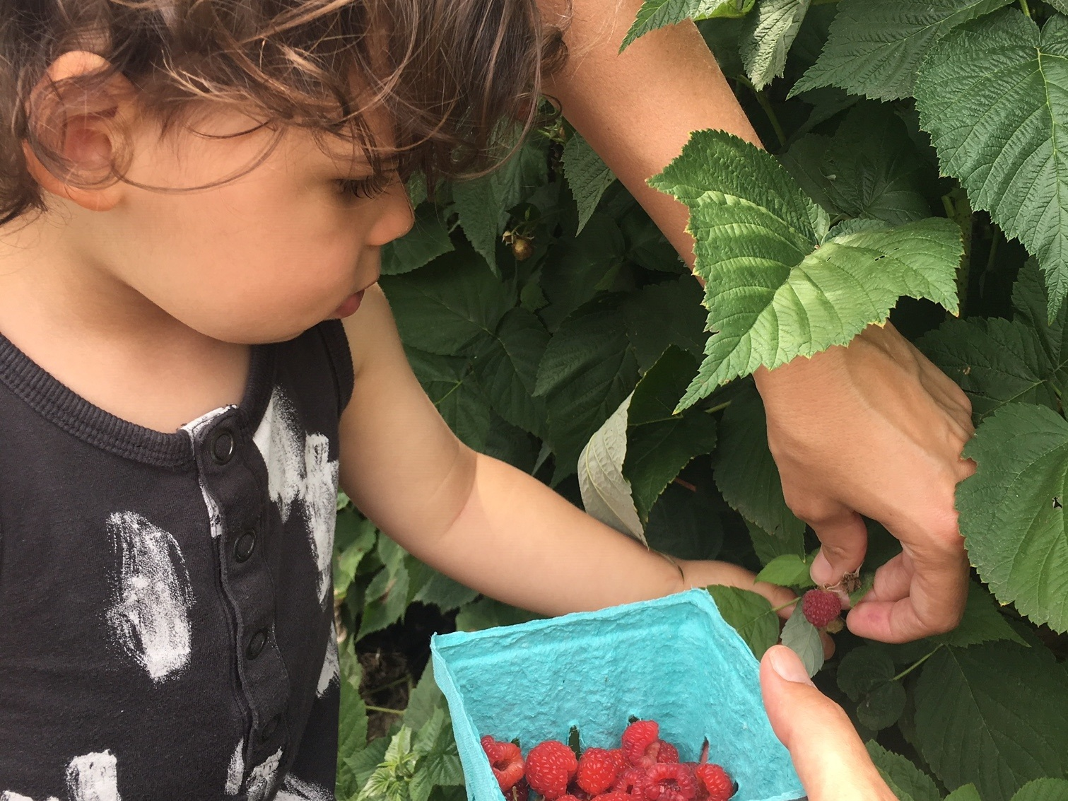 Get fresh air—and fruit:  Diaz and family love stopping at pick-your-own farms on road trips in Michigan.