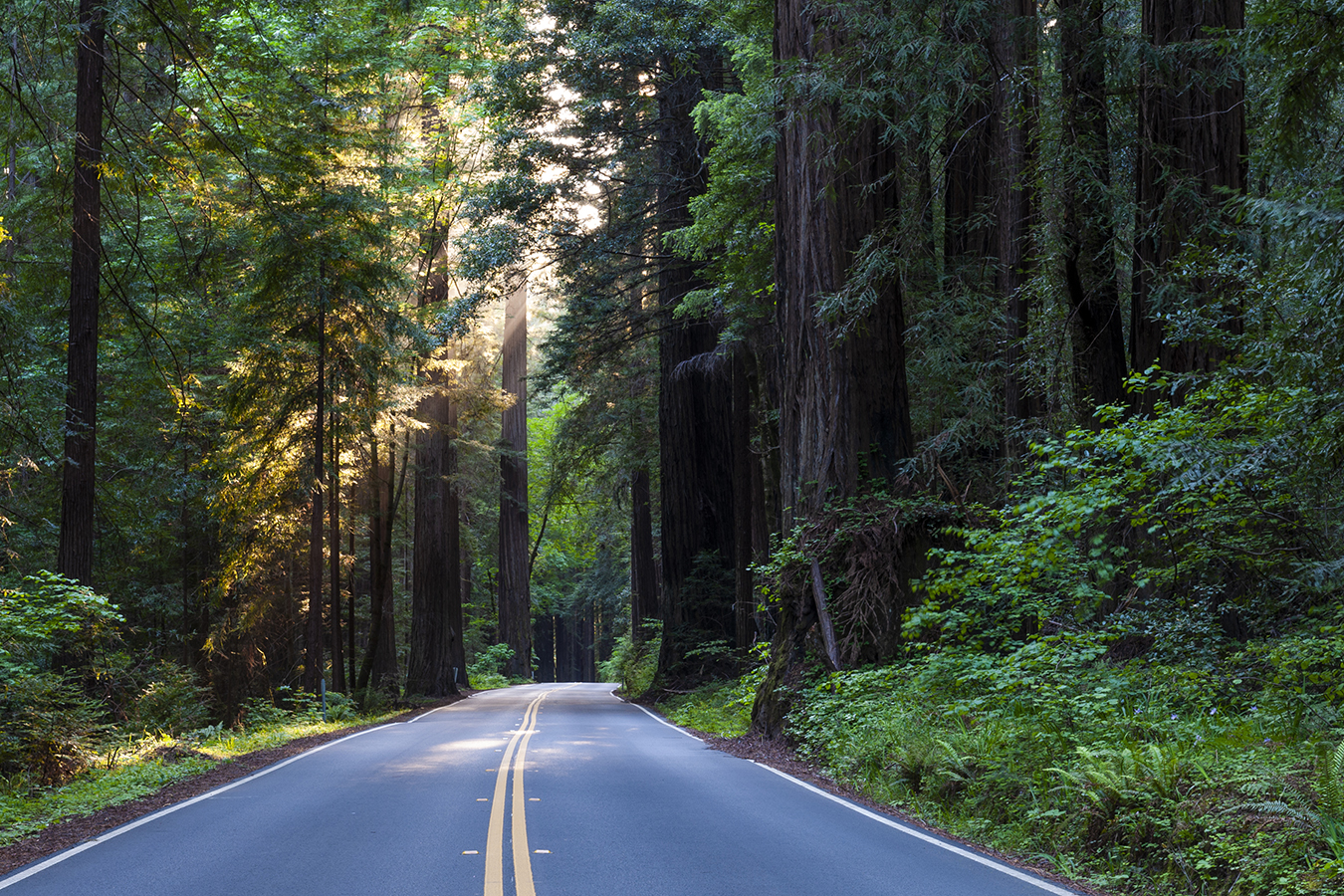 avenue of the giants - This aptly named 31.6-mile scenic highway stretches from just north of Garberville and continues through Scotia, providing the motorist with an up-close and personal experience with the ancient redwoods that line the Avenue. There are plenty of places to pull over and gawk, and redwood groves to stroll through. There are quaint small towns with shops featuring redwood art, artifacts and trinkets. Experience Humboldt Redwoods State Park containing the Rockefeller Forest, the world's largest contiguous old-growth forest of coast redwoods.The Avenue of the Giants is an adventure that everyone should experience. It is akin to other natural wonders of the world and accessible year-round. If you don't want to do the driving check out the Redwood Transit line, operating shuttles seven days a week!