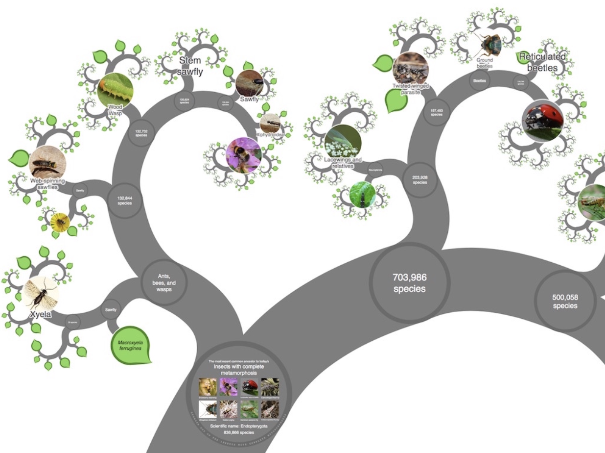 ONE ZOOM TREE OF LIF EXPLORER (CLICK IMAGE)