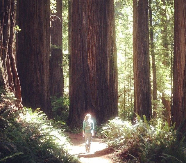 Wandering on a redwood path in Northern California.