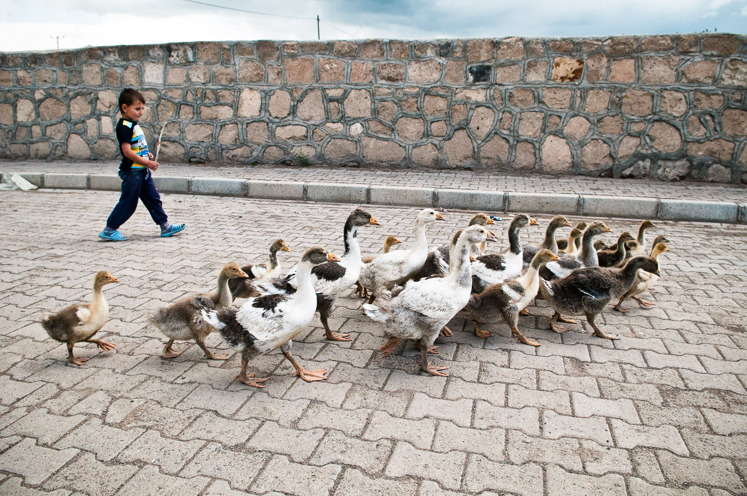 Boy and geese, Kars Turkey.