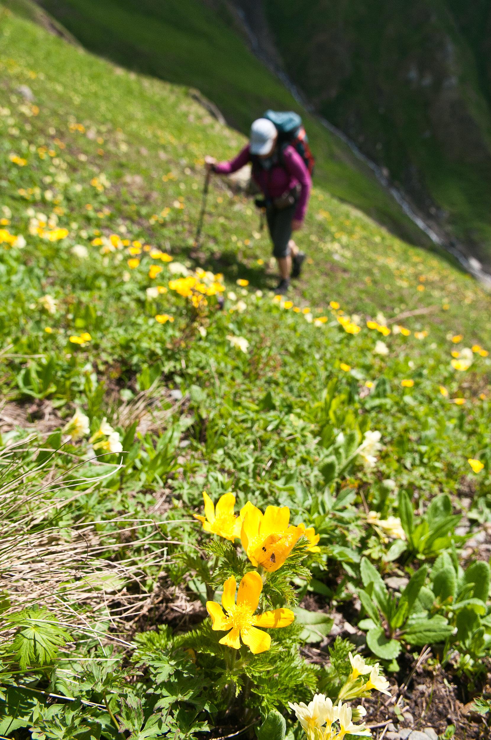 Woman trekking in the mountains above Mestia, Georgia.