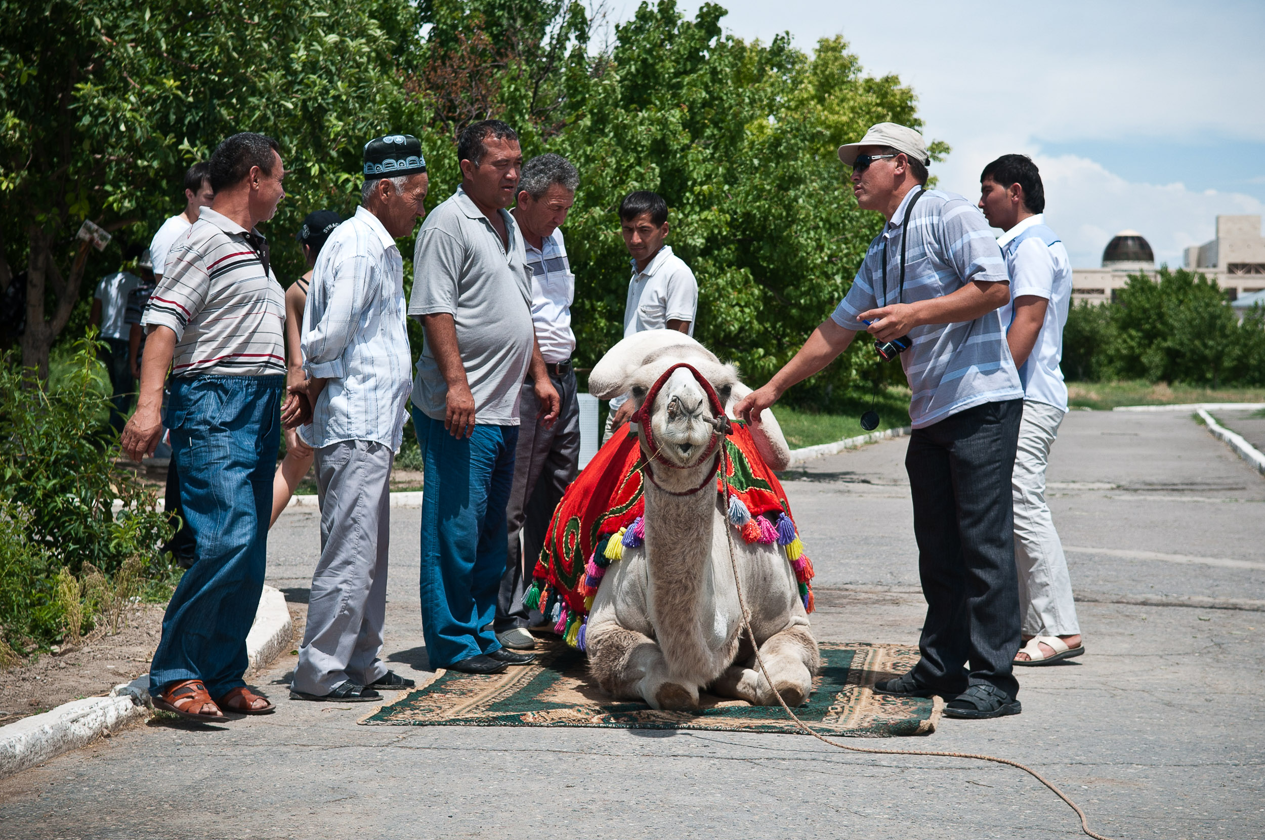 Tourists crowding around a camel, Turkistan, Kazakhstan.