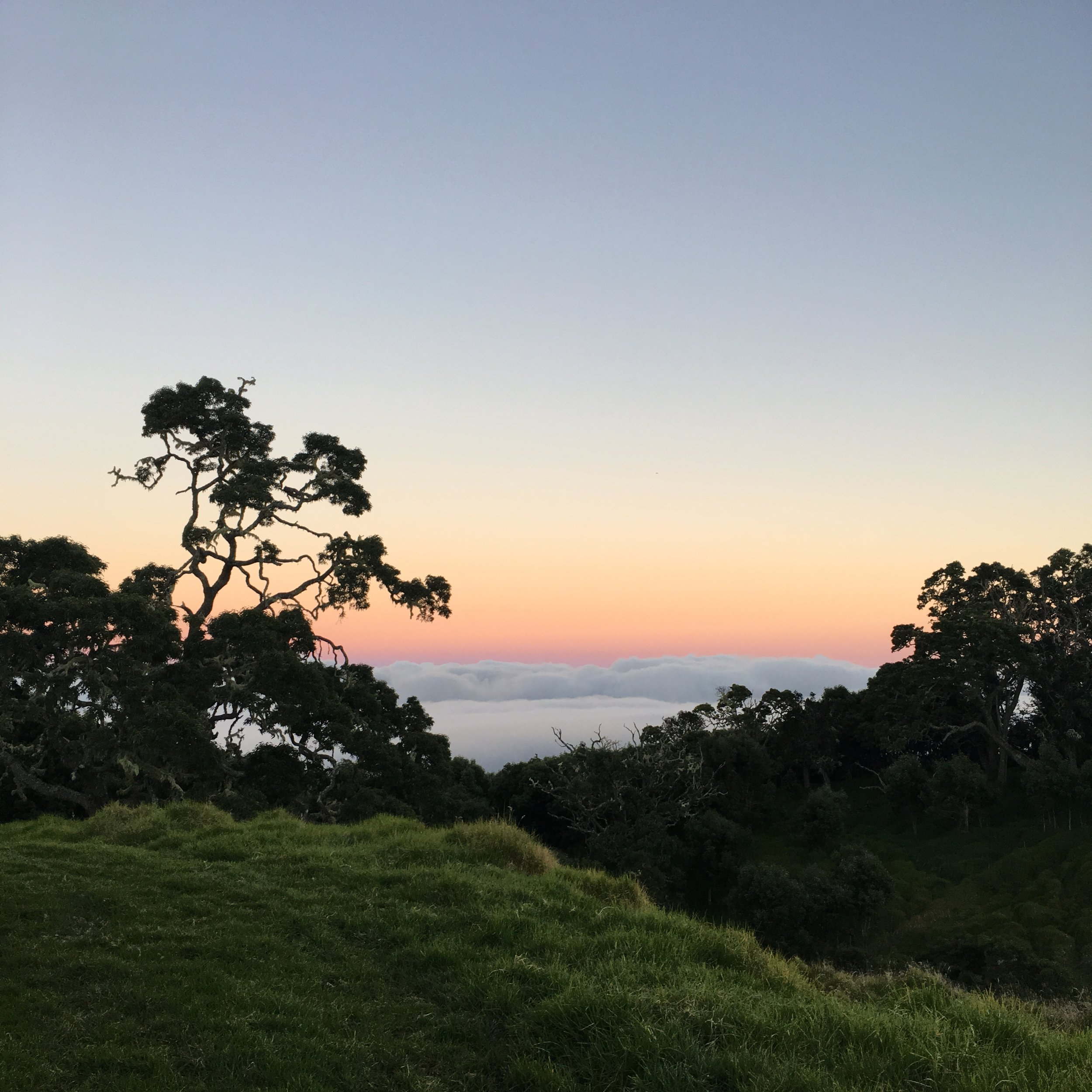 Sunset on Mauna Kea in the Koa forest on Big Island, Hawaii.