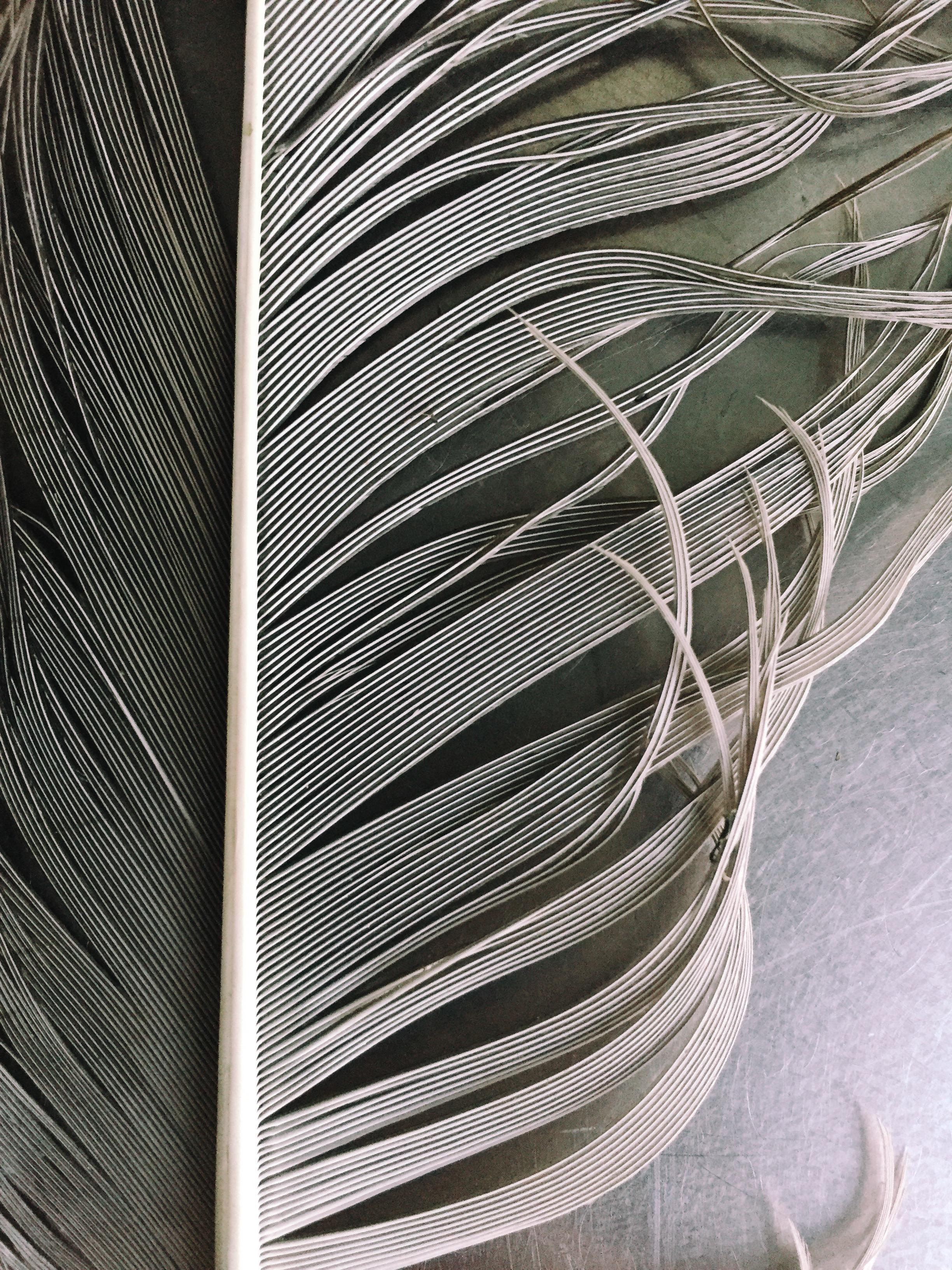 feather.jpeg