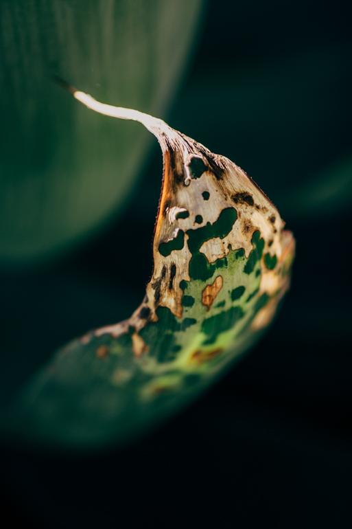 13-52_leaf.jpg