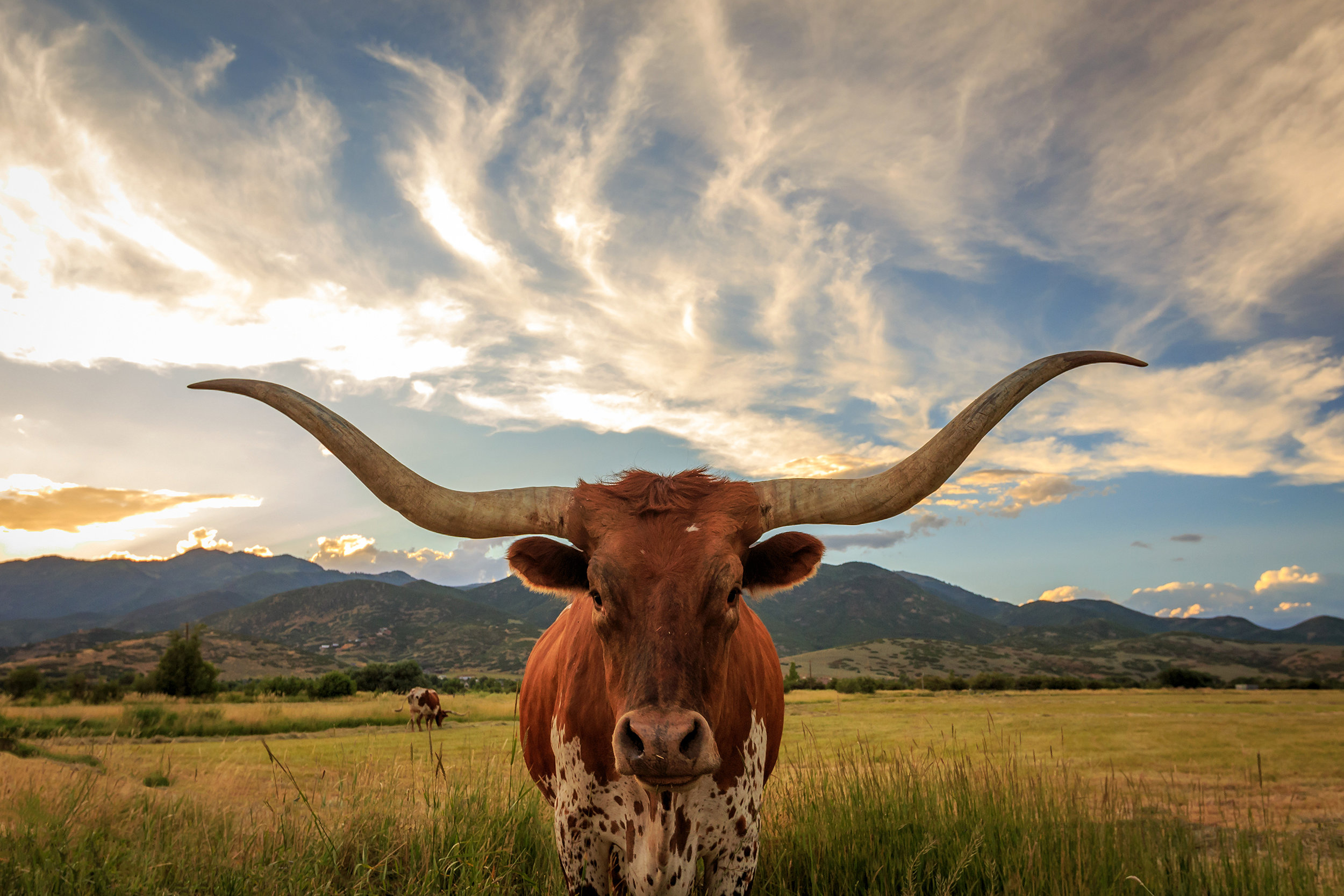Don't mess with Texas, mystery-poster in the vignette below. Also, this pic was taken in Utah. But I'm informed that that is a real longhorn and he's too cute not to post.