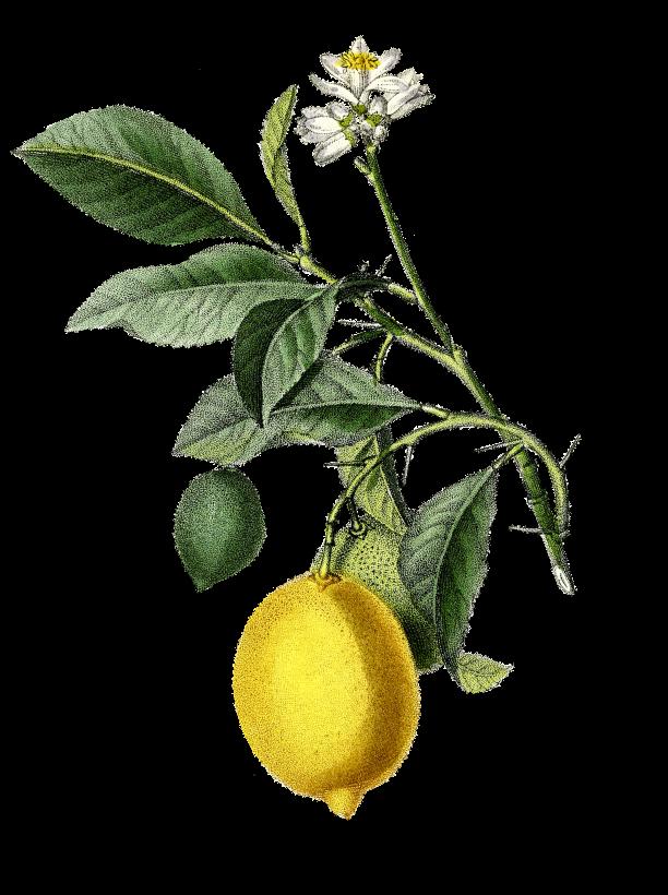 Lemonine